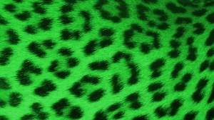 Leopard Green - HD Wallpaper 1080p