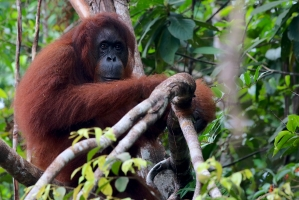 Borneo - Sarawak, Malaysia