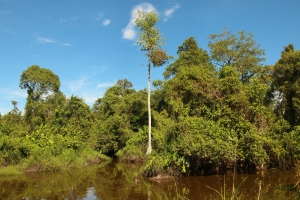 Small stream between Sungai Stamin and Sungai Limo