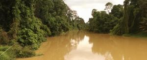 Sungai Niah - River