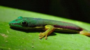 Andasibe - Madagascar