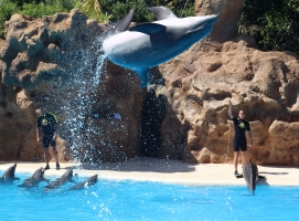 Tenerife - Loro Park
