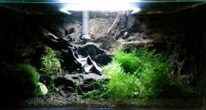 Shrimp tank 23l