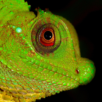 images/imageshover400/reptiles.jpg