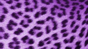 Leopard Purple - HD Wallpaper 1080p