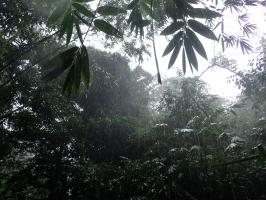 Heavy Rain in Kampung Seroban, Sarawak