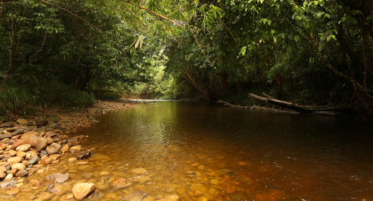 Sungai Mutud Bridge River, Sarawak