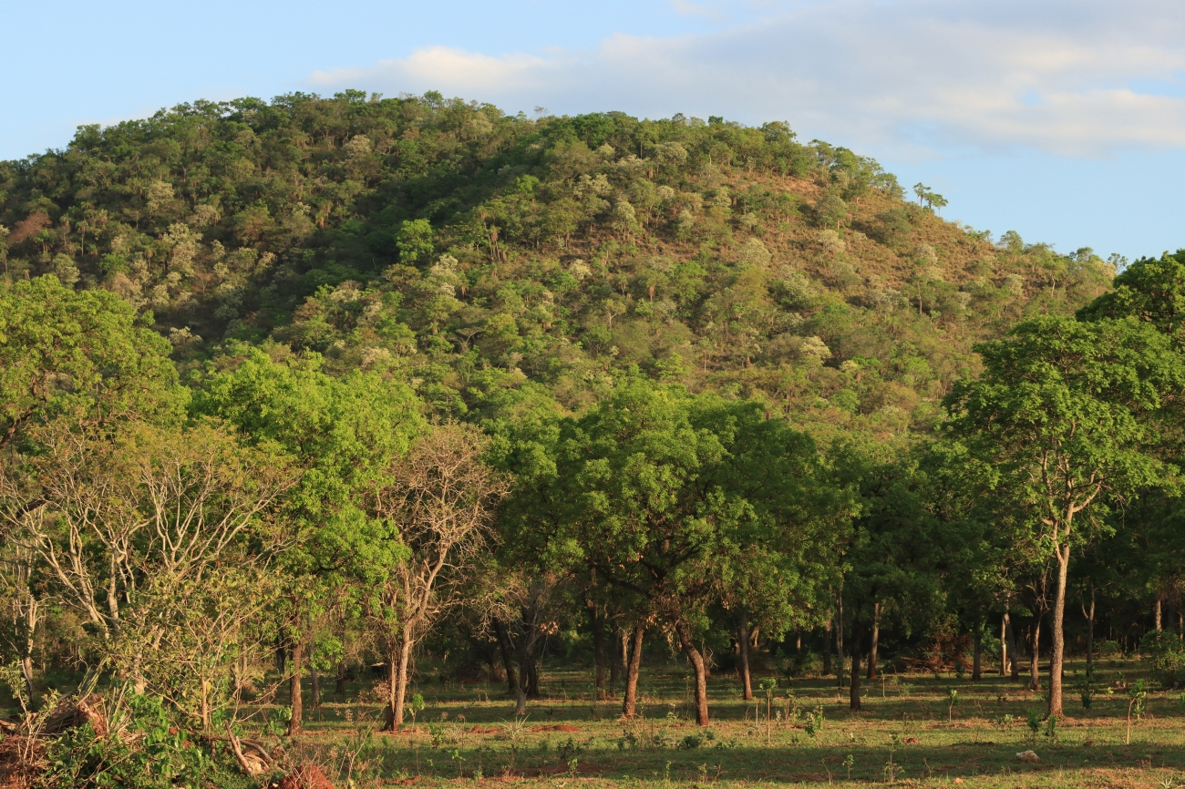 Cerrado, the Brazilian Savanna