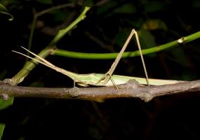 Anja Park - Madagascar