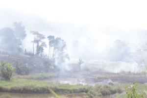 Burning rainforest - Andasibe, Madagascar