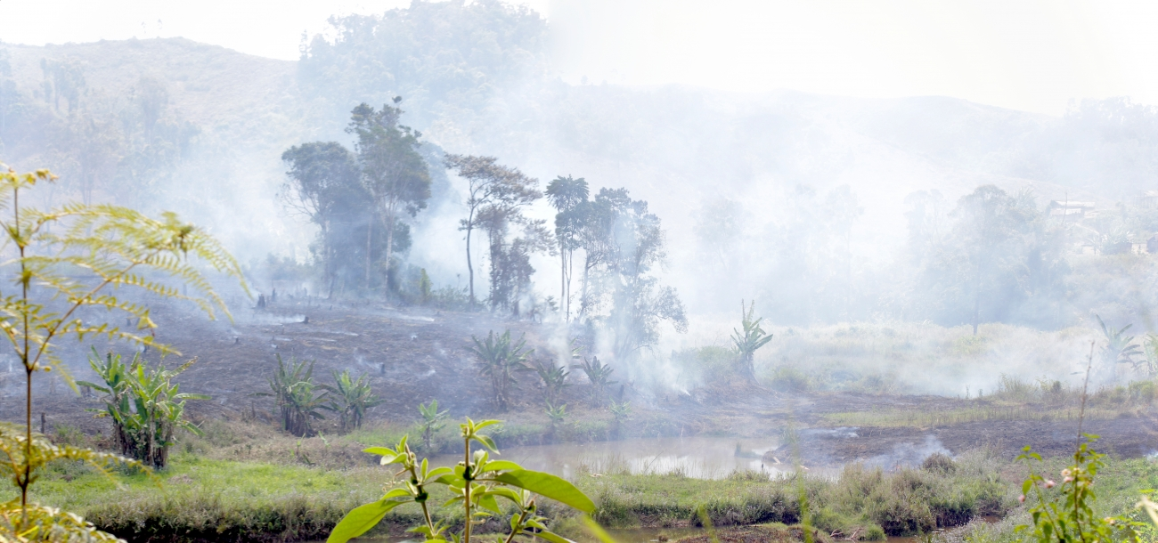 Burning Rainforest, Andasibe, Madagascar