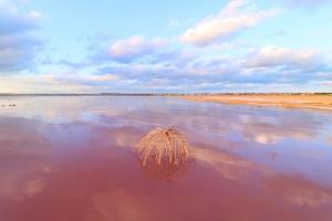 Laguna salada de la mata, Torrevieja, Spain