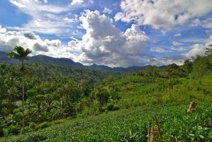 Diyadawa Forest Reserve